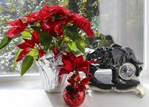 flores de navidad en maceta