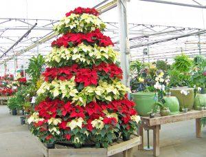 arbol de navidad hecho con flores de pascua